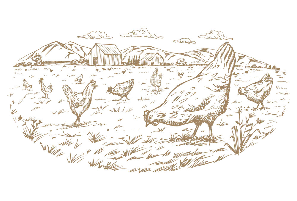 chickens sepia weybridge.jpg