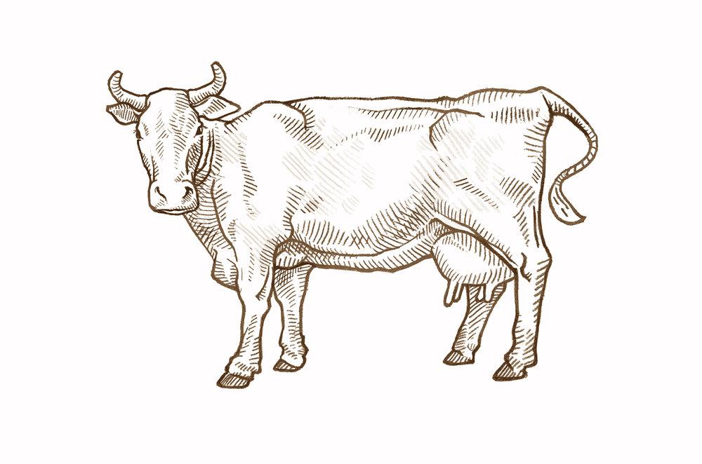 cow sepia weybridge.jpg
