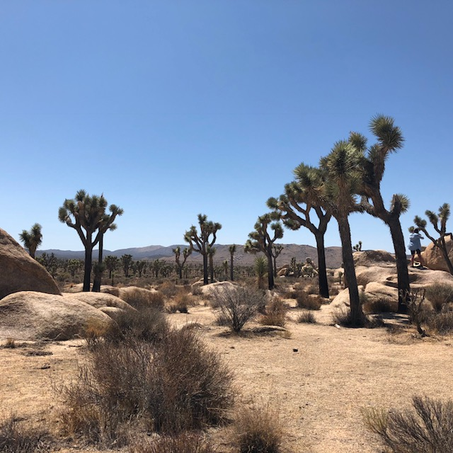 The Majestic Mojave High Desert