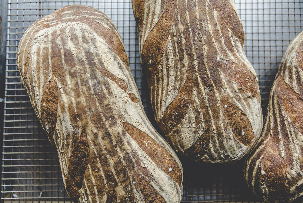 30 Year Old Organic Grape Sourdough