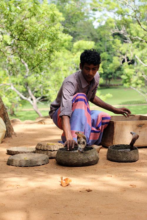 Sigiriya Snake-Charmer