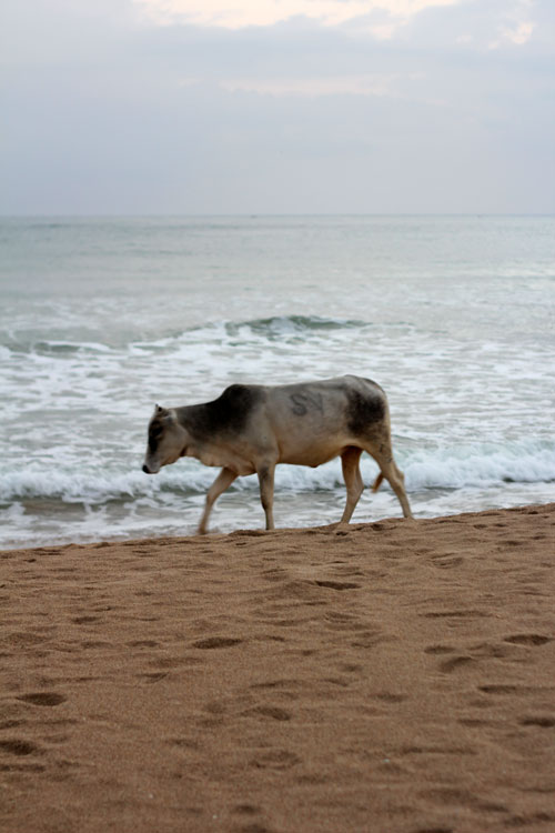 Maalu Maalu Beach Bum