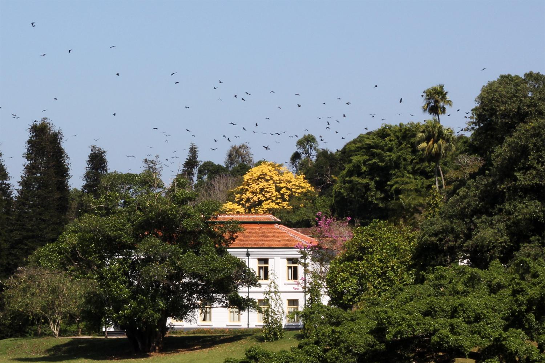 Peradeniya Royal Botanical Gardens - Sri Lanka