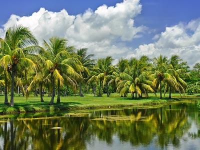 biltmore-coral-gables-tropical-gardens.jpg