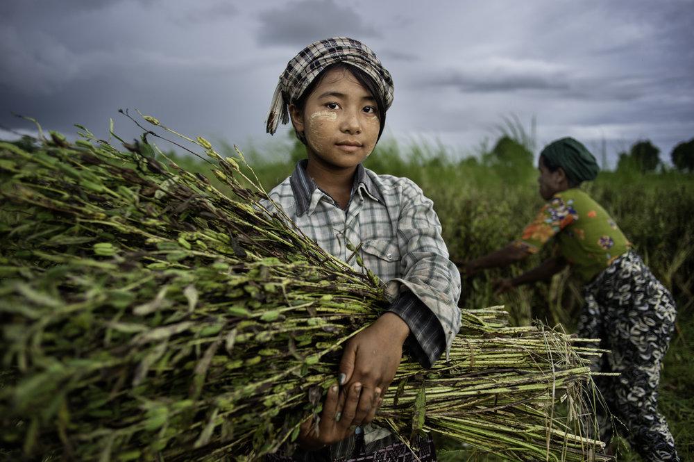 Rice farmer / Burma