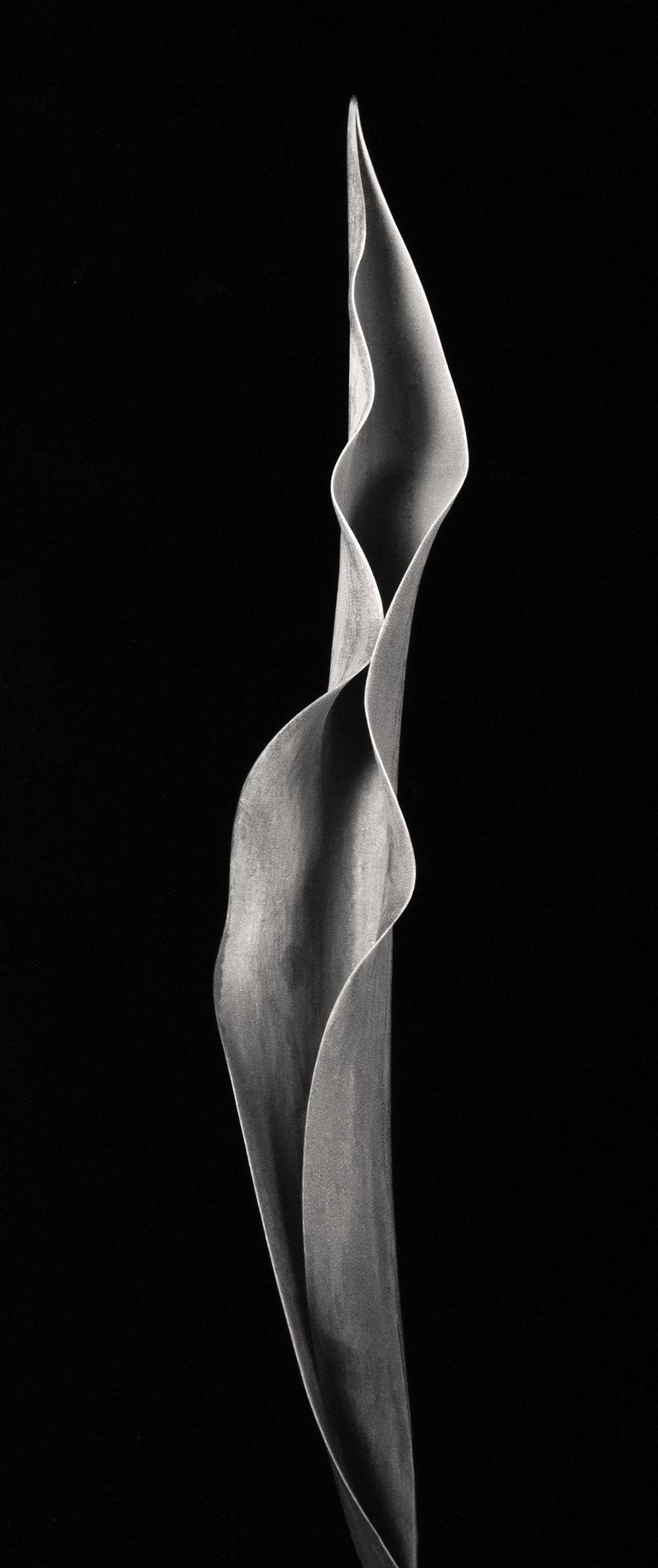 Carol-Lawrence_Clarissa-Leaf.jpg