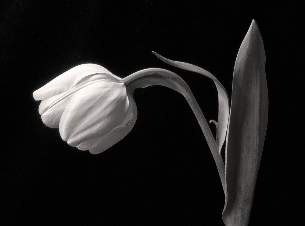 Carol-Lawrence_One-Freak-Tulip-warmer.jpg