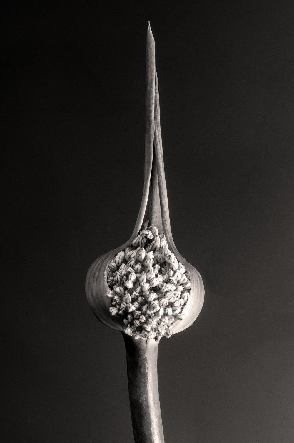 carol-lawrence-slit-scape-alt-2.jpg