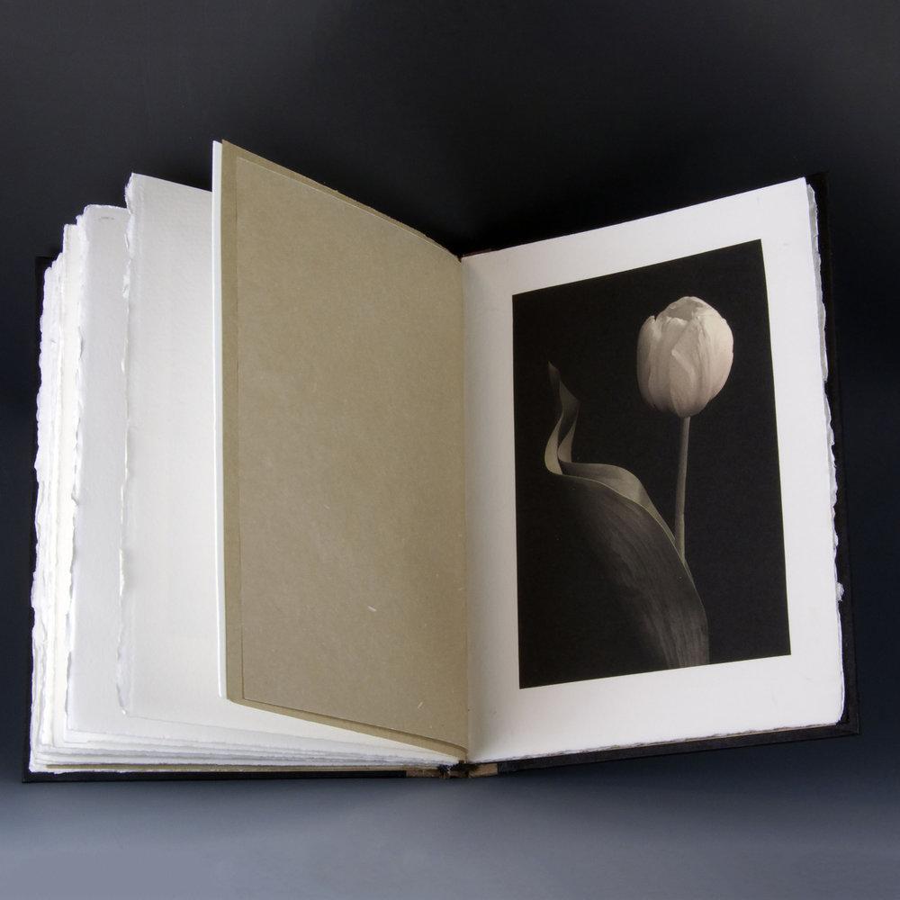 Carol-Lawrence_Tulip-Book-Page-6.jpg
