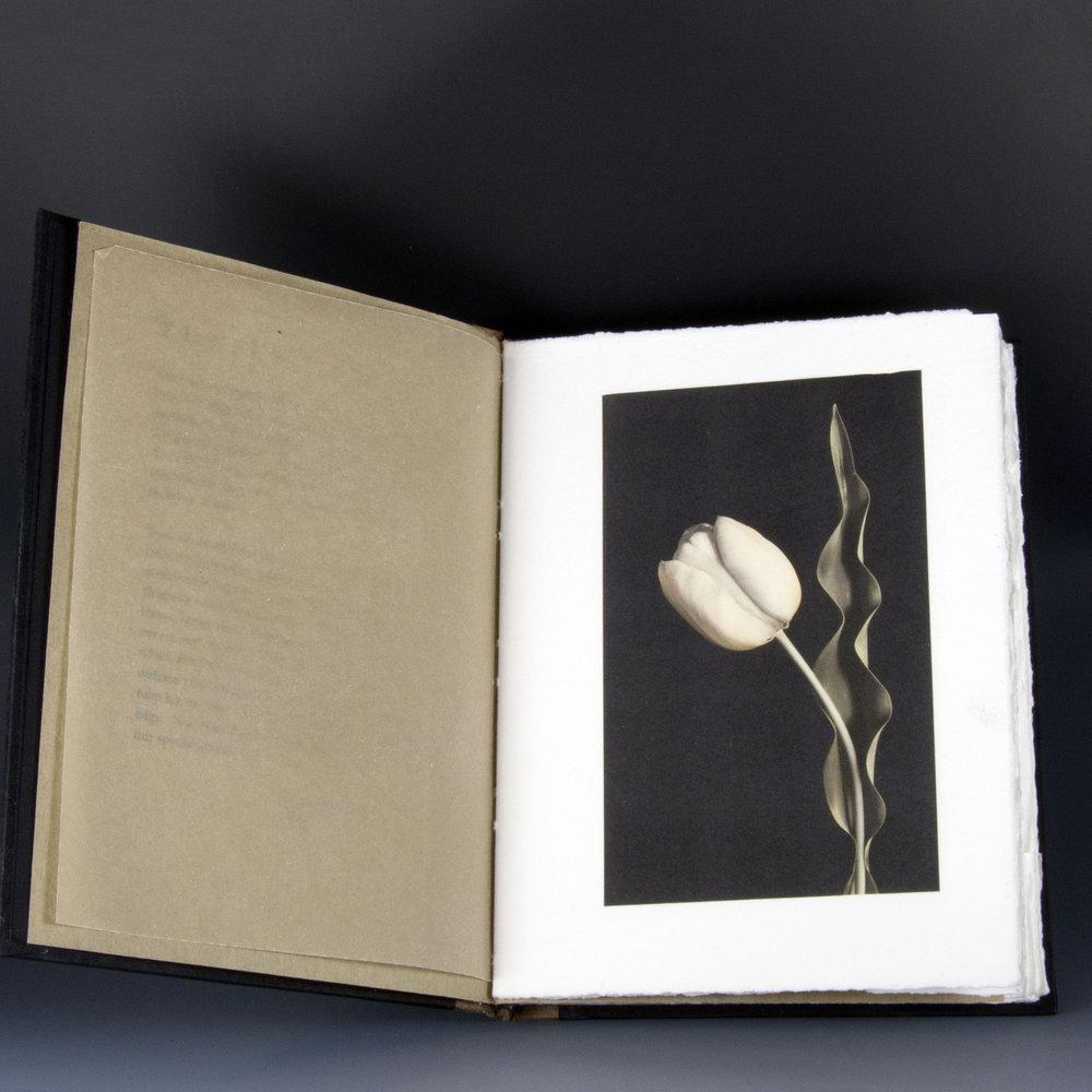 Carol-Lawrence_Tulip-book-page.jpg
