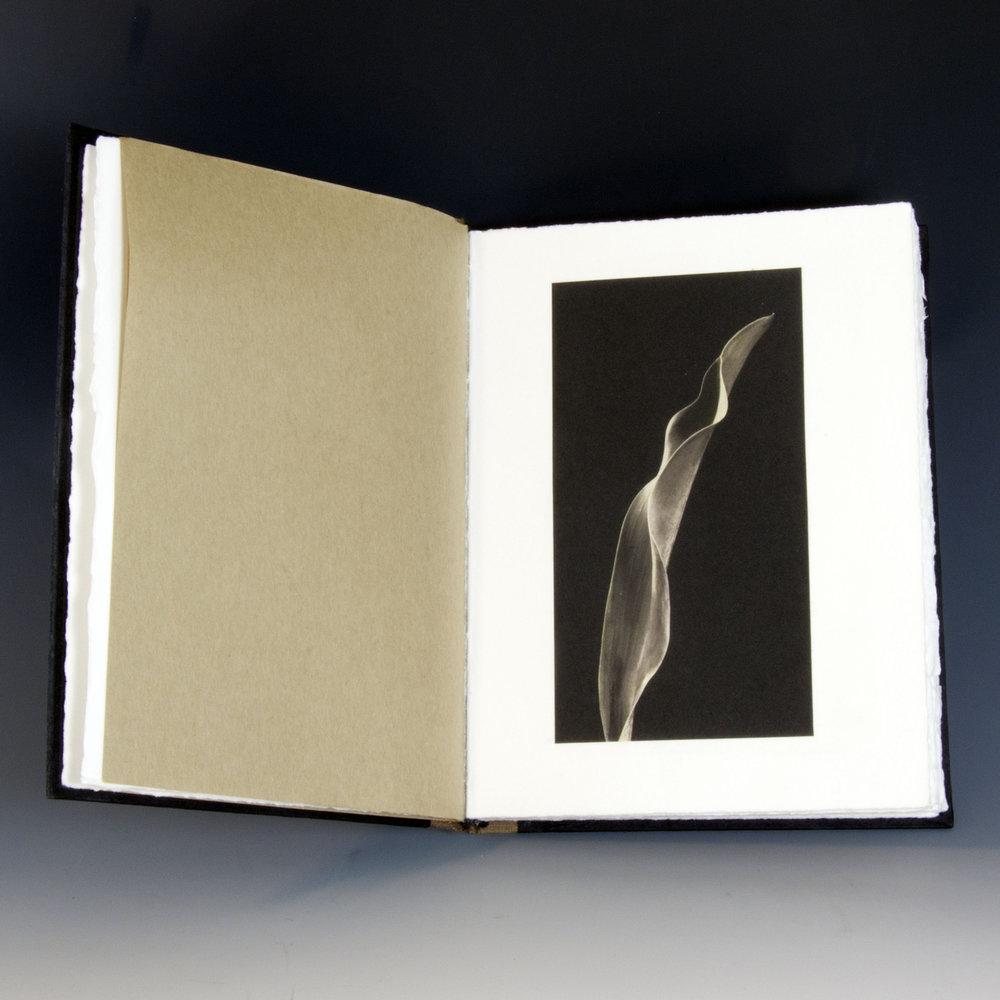Tulip-Book.jpg