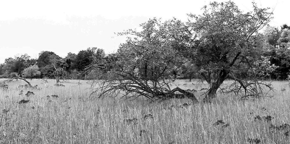 Carol-Lawrence-Old-Orchard.jpg
