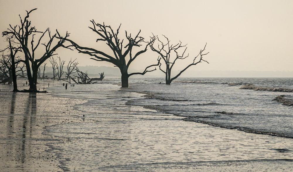 Carol-Lawrence-Botany-Bay-Beach-4.jpg
