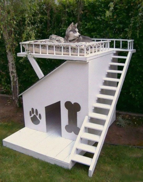 The double decker dog house