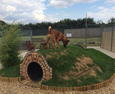 The hobbit dog house