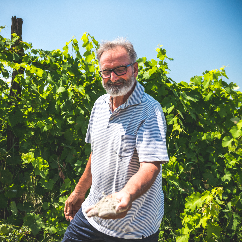 Daniele Saccoletto - Piedmont, ItalyWho: Daniele Saccoletto does it all.Where: San Giorgio Monferrato, close to Casale, PiemonteWhat grapes: Grignolino, Barbera, Freisa, Nebbiolo, SyrahHow many bottles: 20,000Key facts: Certified organic by ecocert Italy since 2004, certified organic grapes since 2000. Low sulfur (40mg/l roughly). Also no enzymes, added yeasts, no animal gelatin, harvest in 3 successive passes in 14kg baskets.