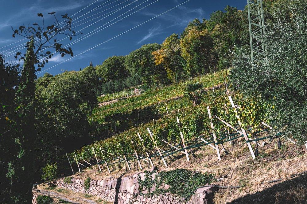 Thurnhof and Alto Adige-4.jpg
