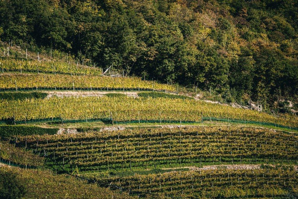 Thurnhof and Alto Adige-13.jpg