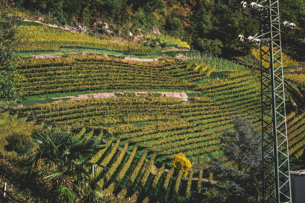 Thurnhof and Alto Adige-23.jpg
