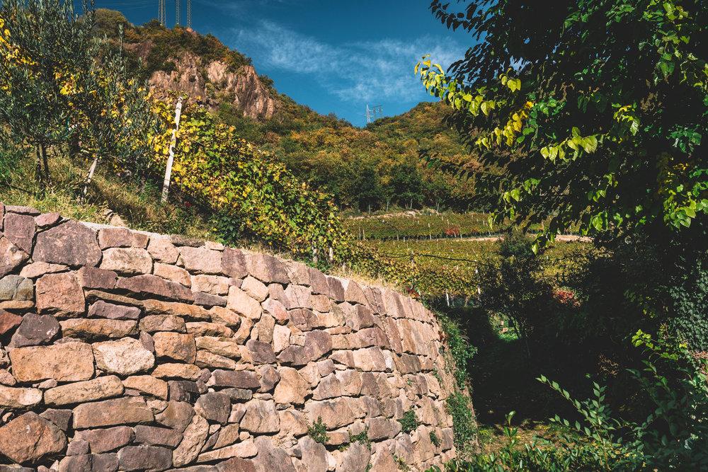 Thurnhof and Alto Adige-32.jpg