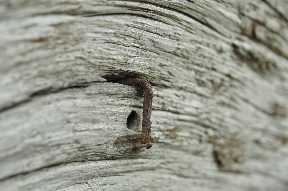 redwood 20.JPG