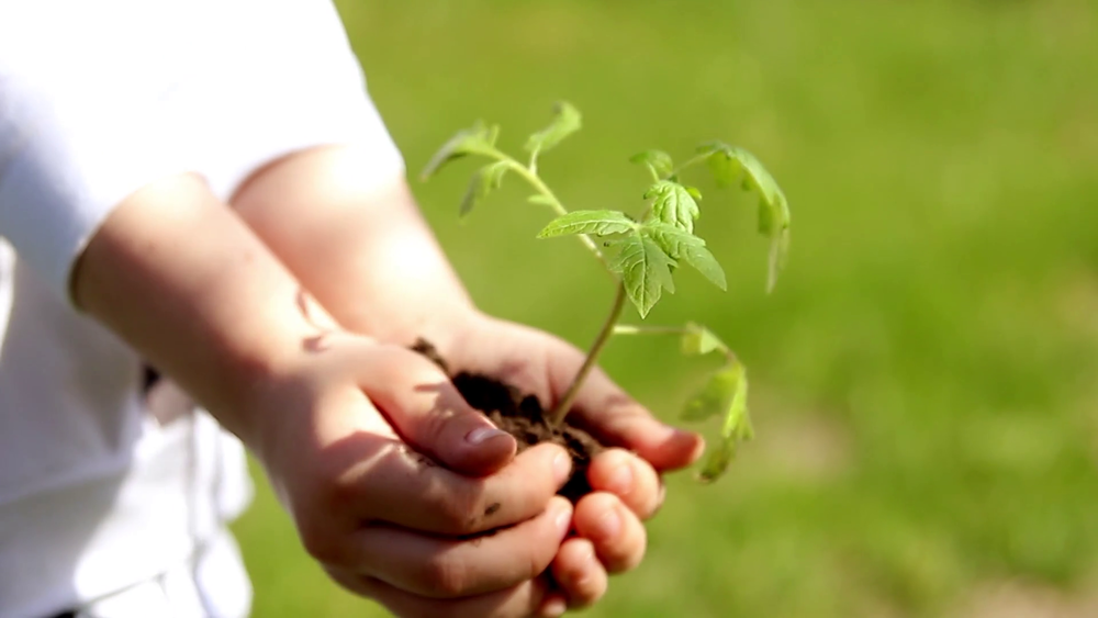 videoblocks-children-hands-holding-young-plant-against-spring-green-background-ecology-concept_st4rlavyz_thumbnail-full01.png