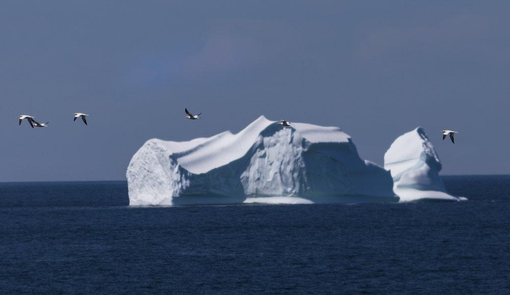 PLACES_Newfoundland_0016.JPG