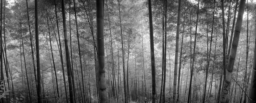 竹高林深,心静思远。