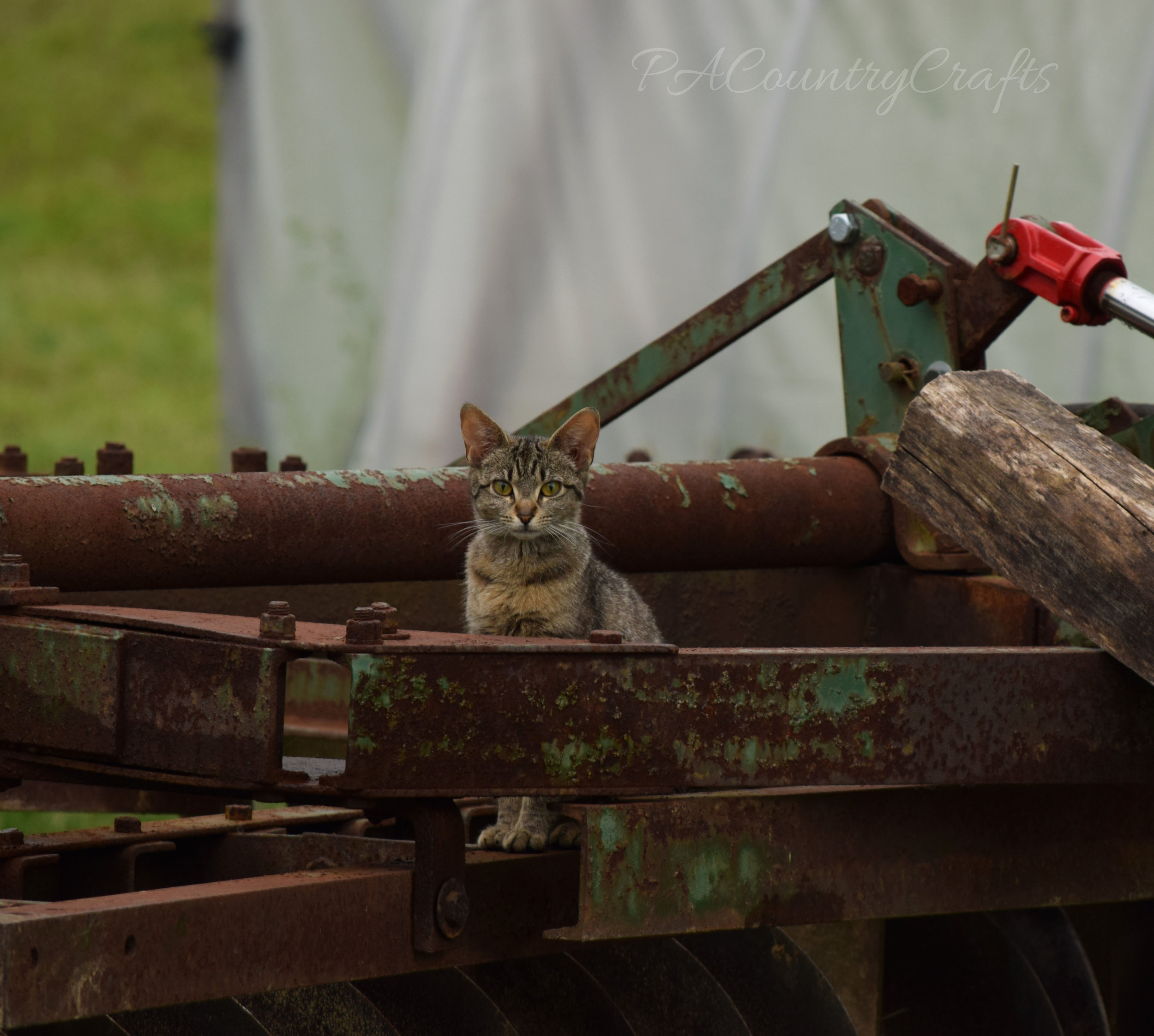 cat on rusty disk