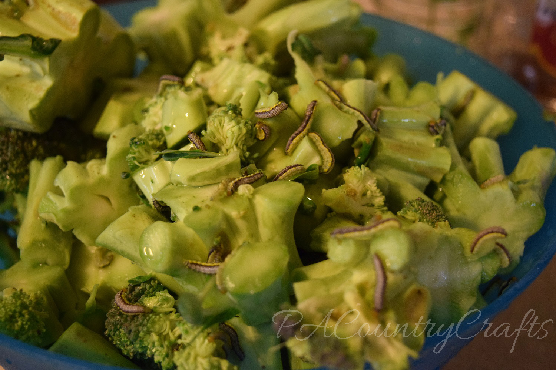 worms on broccoli