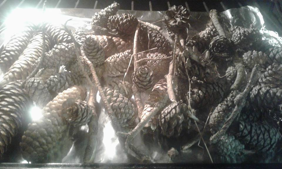 how to bake pine cones