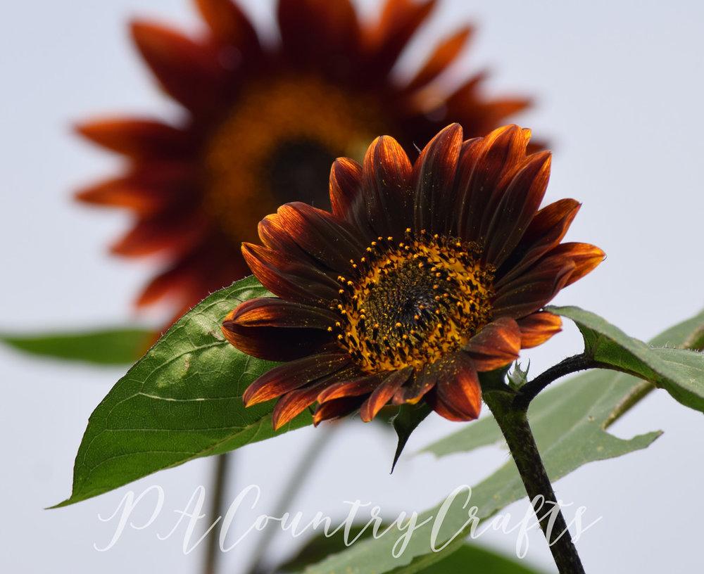 Sunflower Planner Stickers