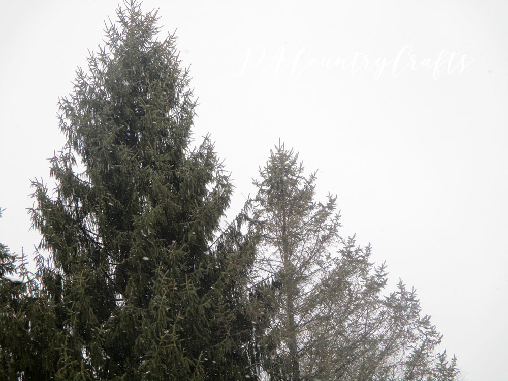 Snow day...