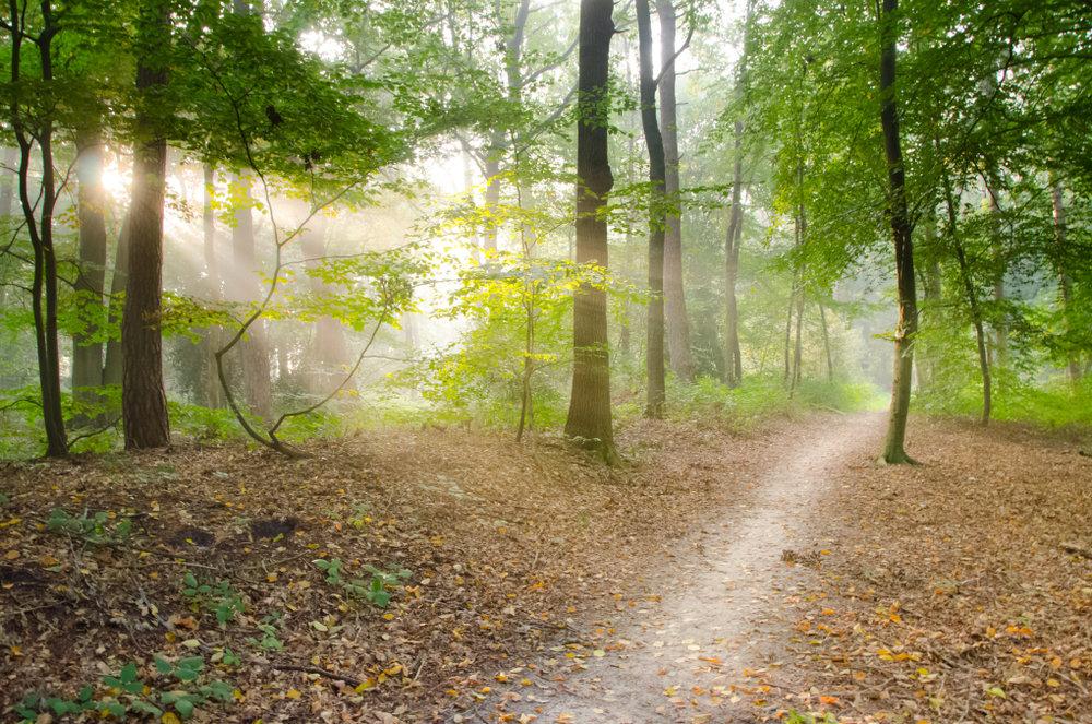 path (1).jpeg