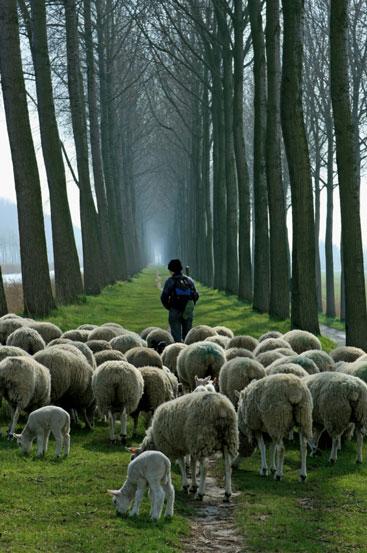 Shepherd-and-sheep-2.jpg