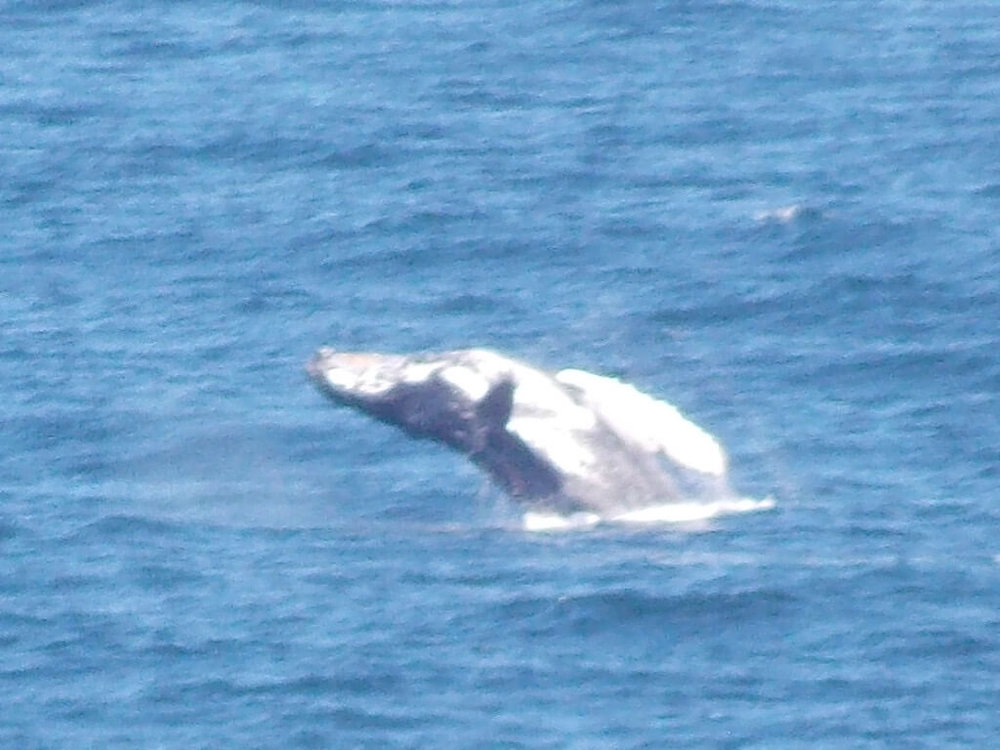 Whale-Flip.jpg