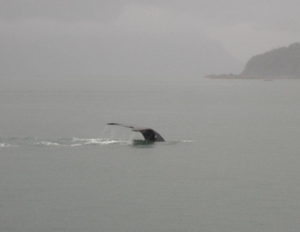 Whale-tale-flip.jpg