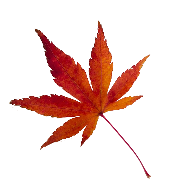 maple-leaf-638022_1920.png