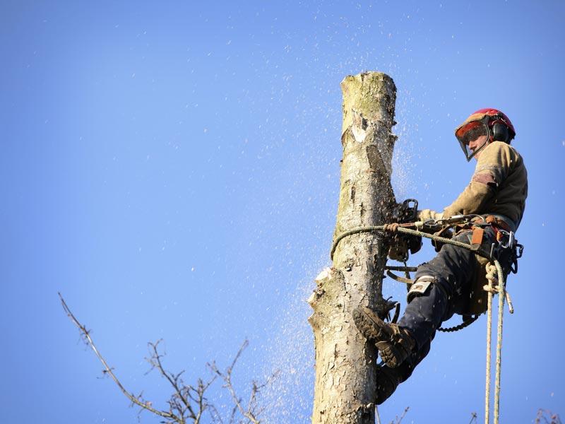 arborist-removing-tree-washington.jpg