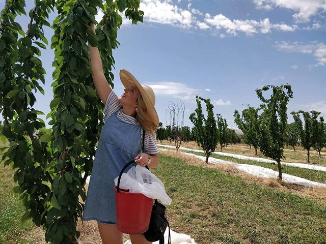 A few weeks ago I got to be a real life farmer girl emoji 👩🏼‍🌾 We went cherry picking and it was so much fun! 🍒 So cool to see where our food comes from 🤓 Have you ever been fruit picking?