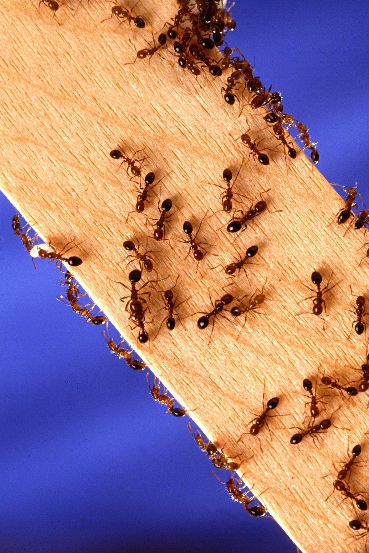 ants.jpeg