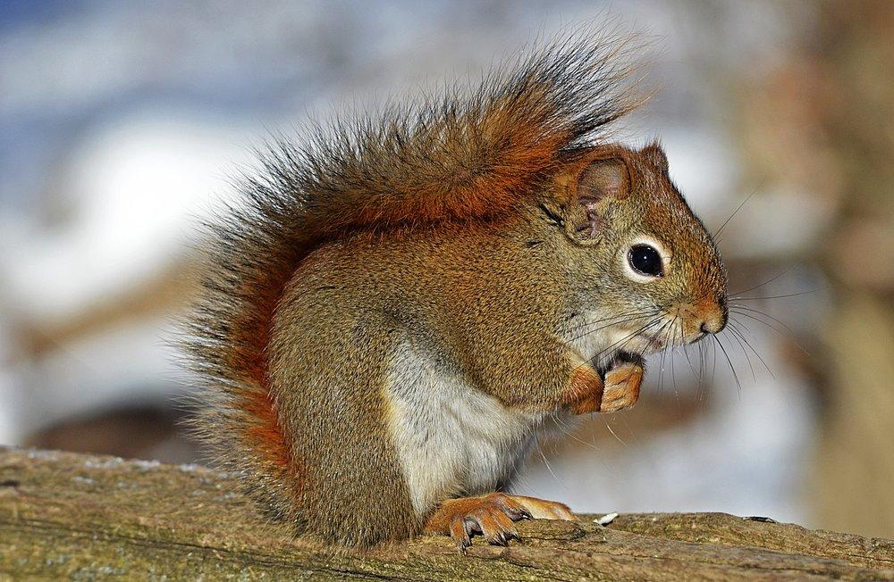 animal-cute-environment-40745.jpg