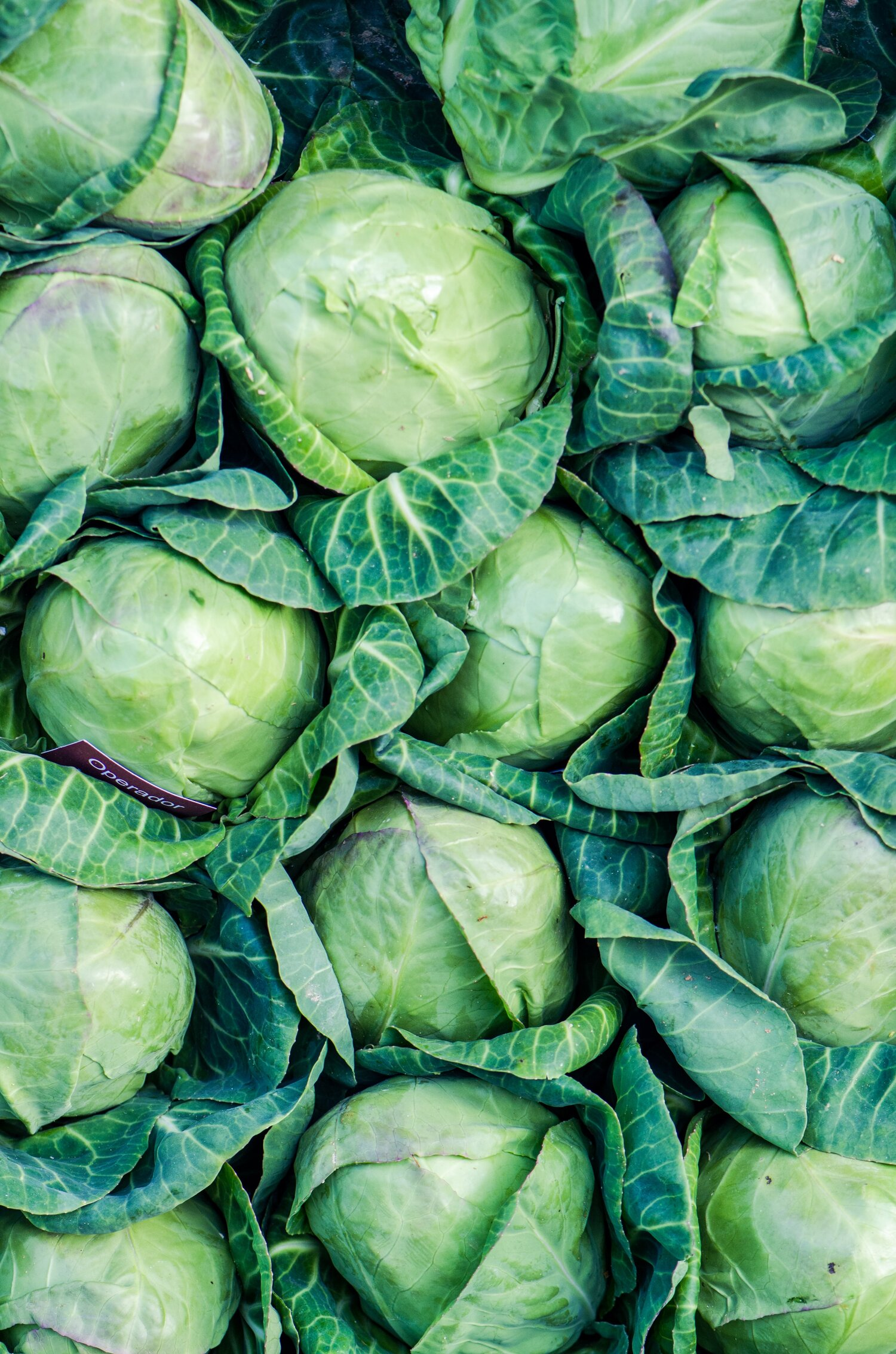 Cabbage 12 Ways Mark Bittman