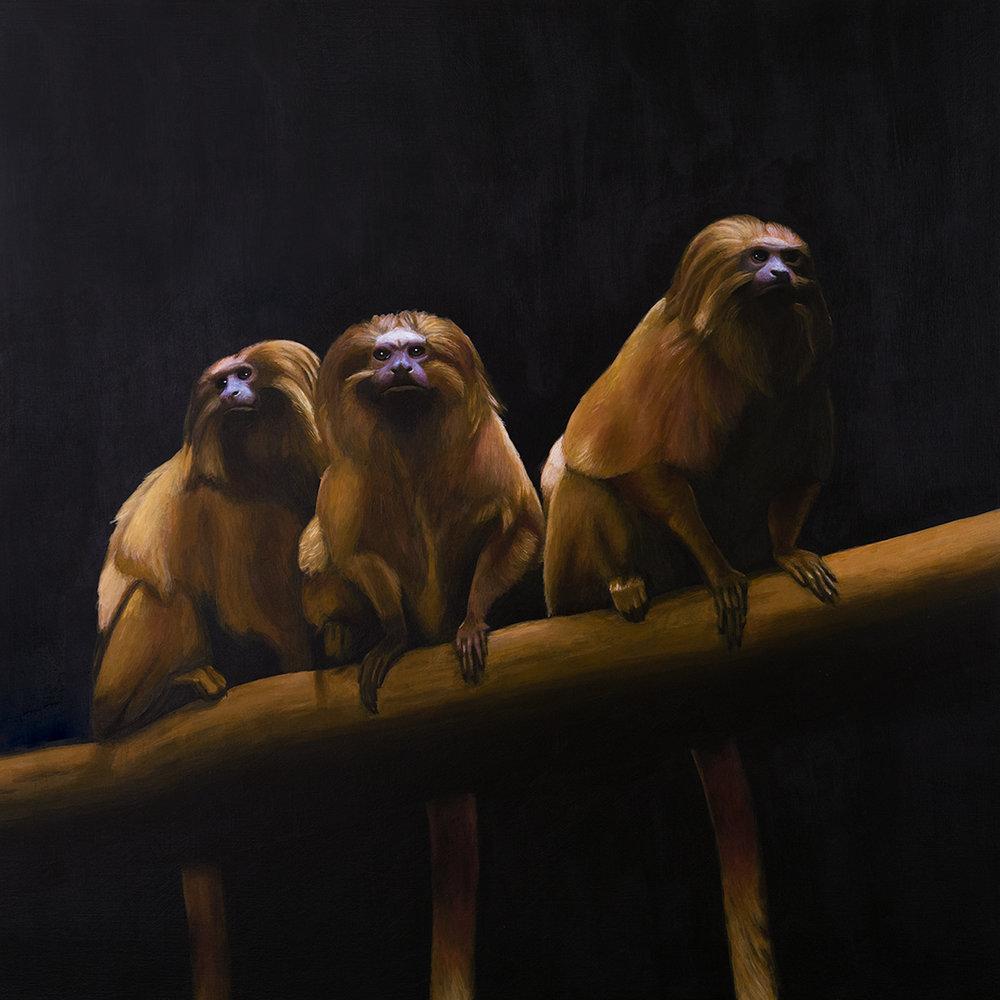 Three Wise Tamarins