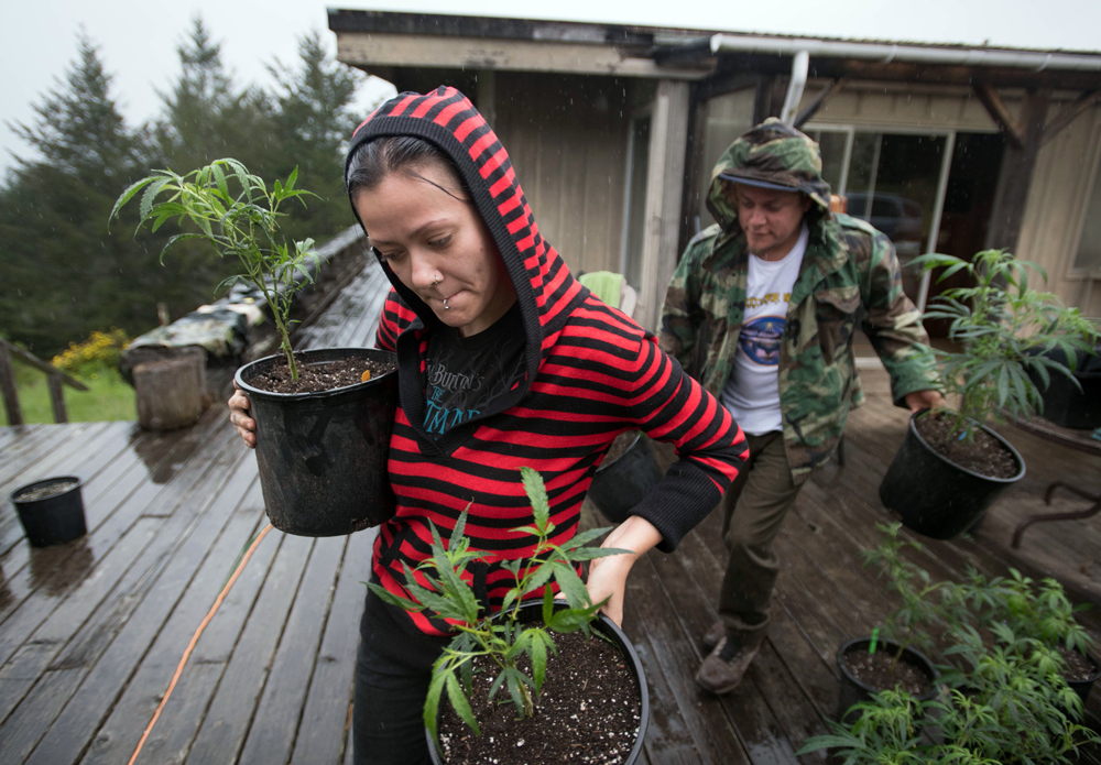 Percilla (L) and Chris (R) who are part of a live/work exchange program, carry marijuana plants into a greenhouse in Mendocino County, California on April 19, 2017. Marijuana growers, forced to run their businesses with cash, must navigate legal and political gray areas as regulations and laws continue to change. (Photo by Josh Edelson/AFP/Getty Images)