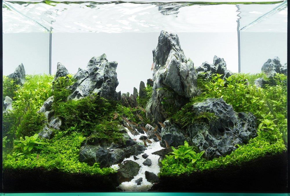 Valley Aquascape