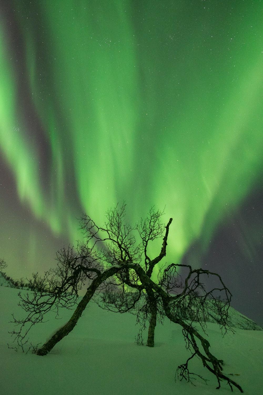 Polarlicht über Tromsø