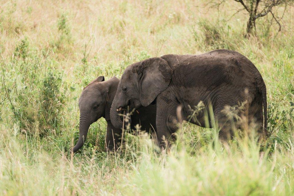 Zwei junge Elefanten