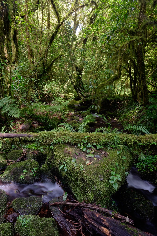 Bach im Regenwald