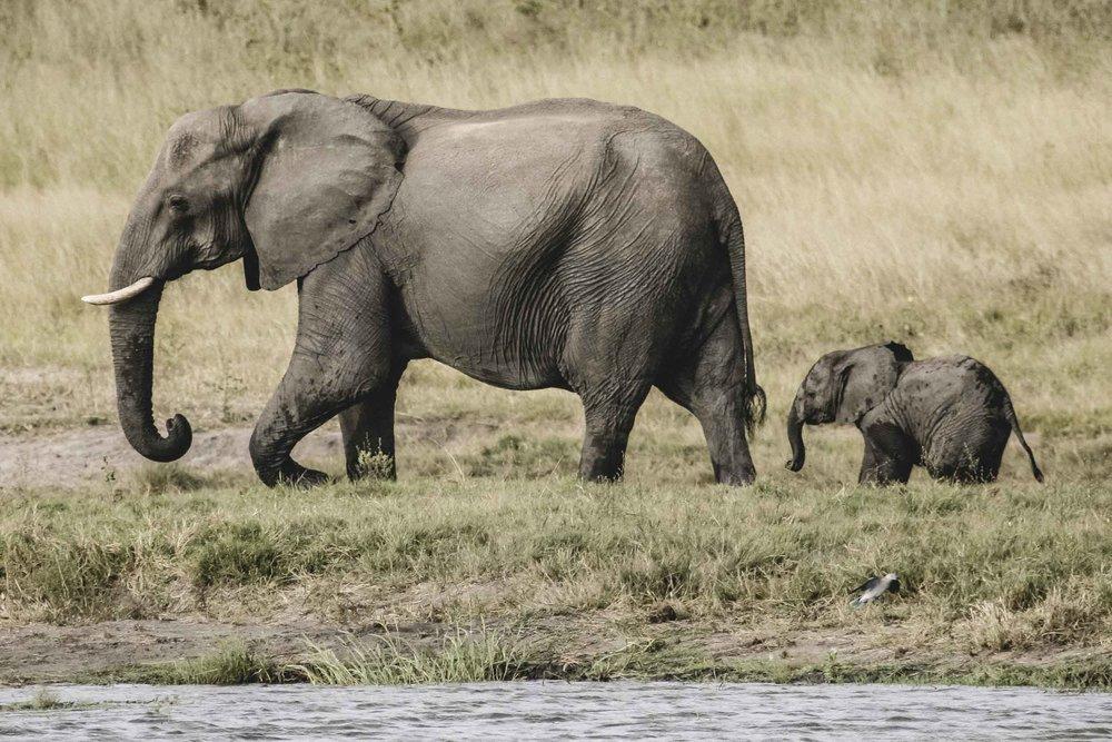 ADDO ELEPHANT NATIONAL PARK - FULL DAY TOUR